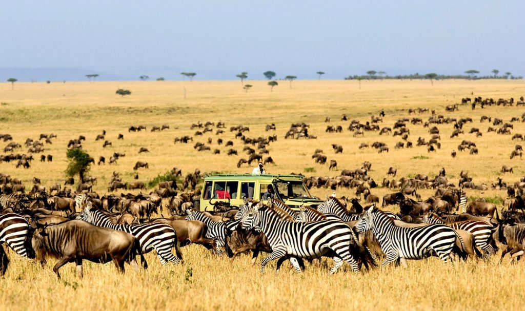 Game Drives in Kenya